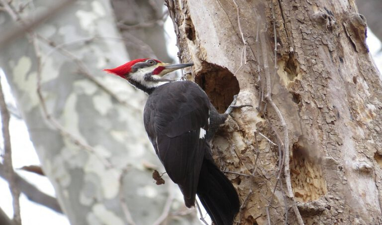 Best Woodpecker Deterrent