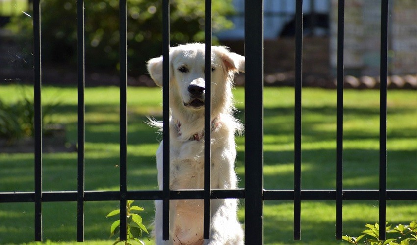 How Do I Stop My Dog from Jumping The Gate